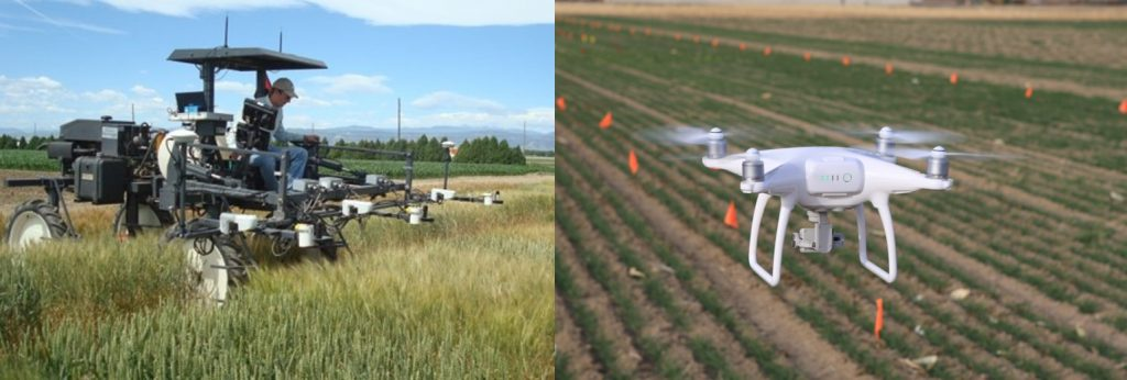 Photo on the left is a high-clearance tractor with multiple attached sensors being used to phenotype wheat in Dr. Jesse Poland's program at Kansas State University. Photo on the rights is a quad-copter drone (or UAV, unmanned aerial vehicle) capturing spectral reflectance data in a Colorado State University wheat field trial.